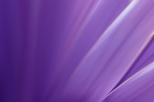 purple-blur-1393271-m