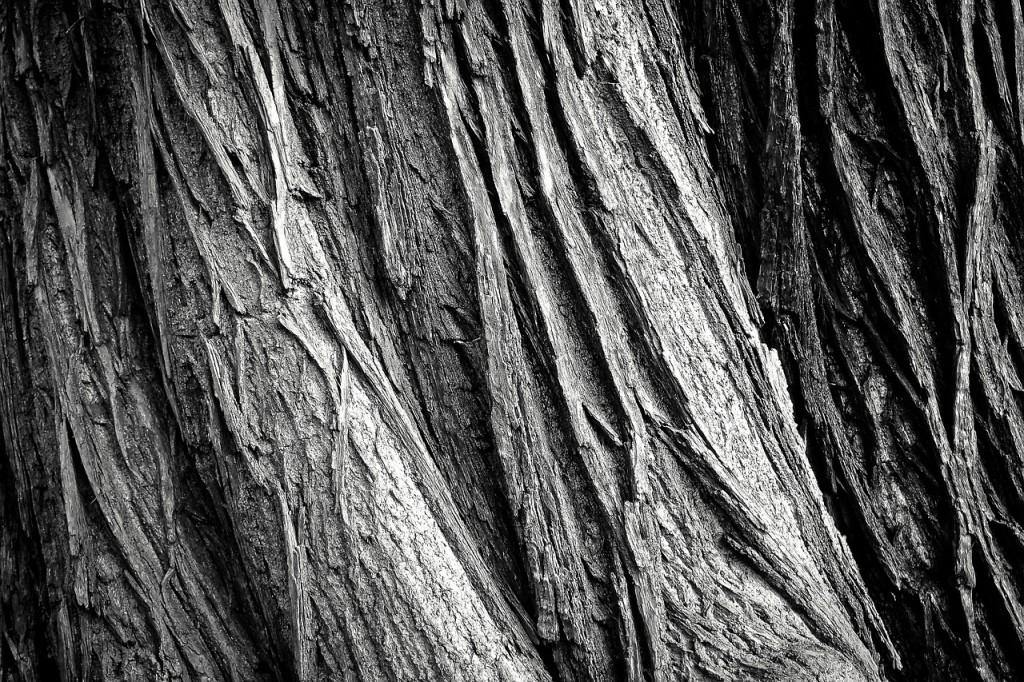 tree-2106115_1280