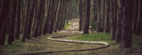 Un jeune paradoxe : la Belle au bois dormant
